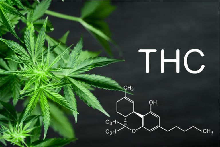 THC medical cannabis